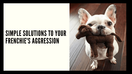 Simple solutions to your Frenchie's Aggression - French ...